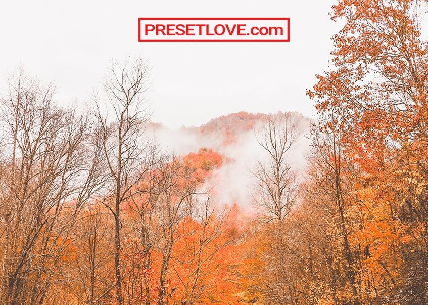 Trees with orange autumn leaves