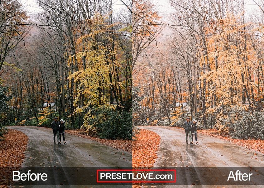 A couple strolling on a road lined with tress in fall with orange leaves all around