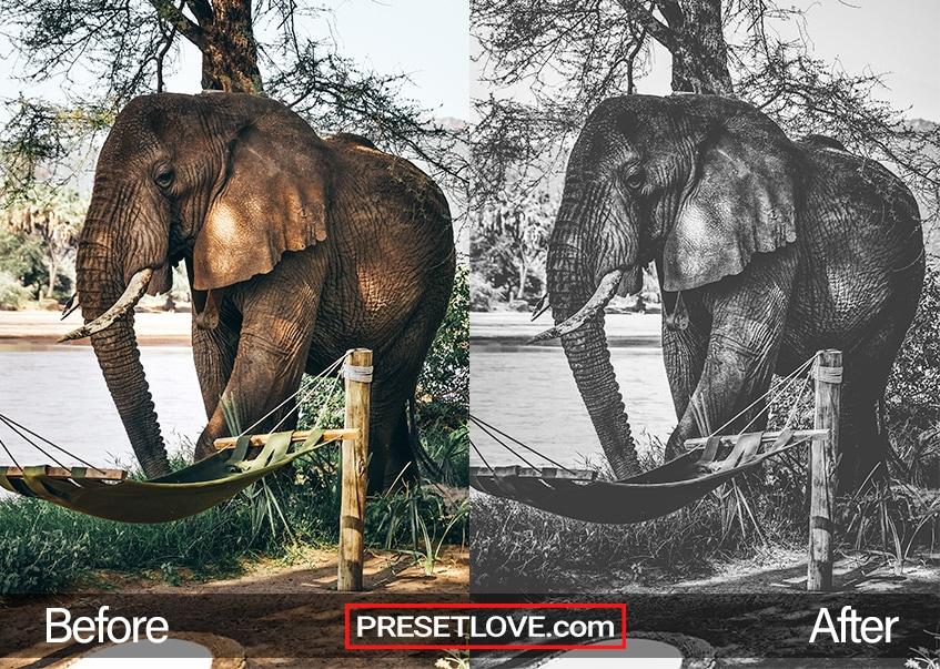 A sharp monochrome image of an elephant