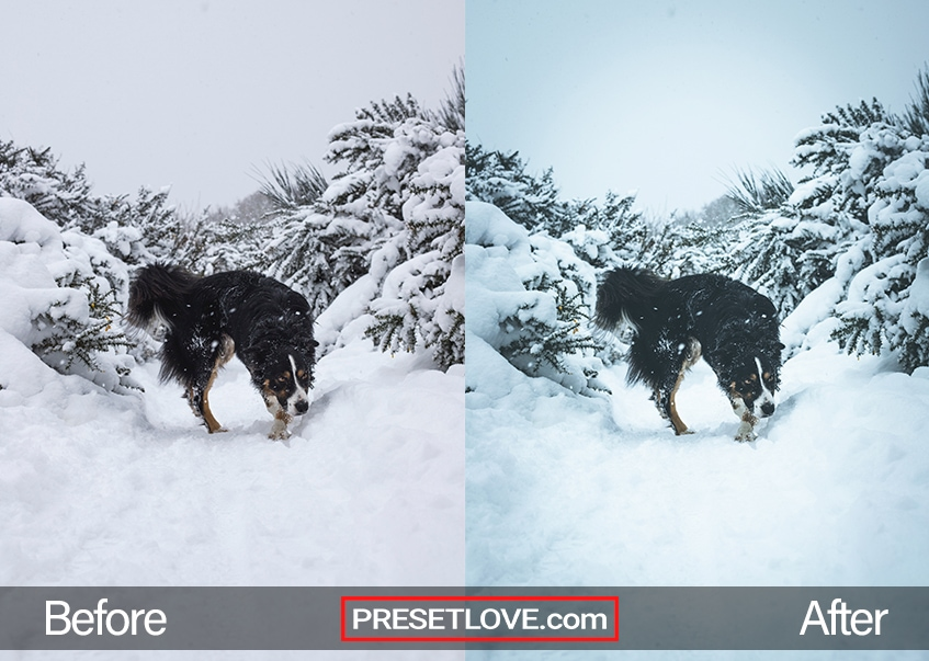 A dog playing in a snowy landscape