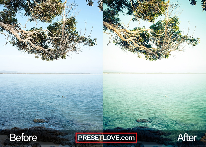 A warm and detailed photo of the sea and some tree branches