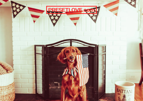 A brown dog carrying a US flag in its mouth