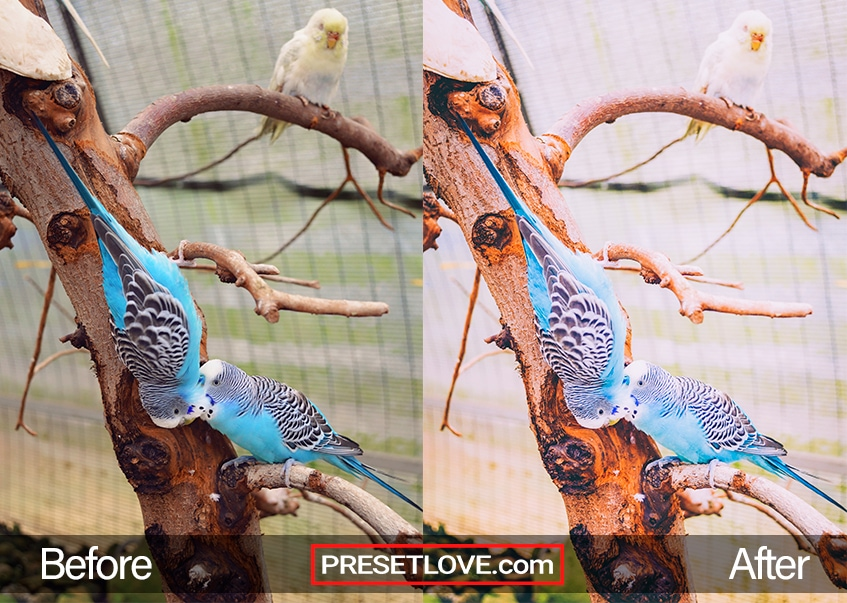 A warm film photo of parakeets perched on a tree branch