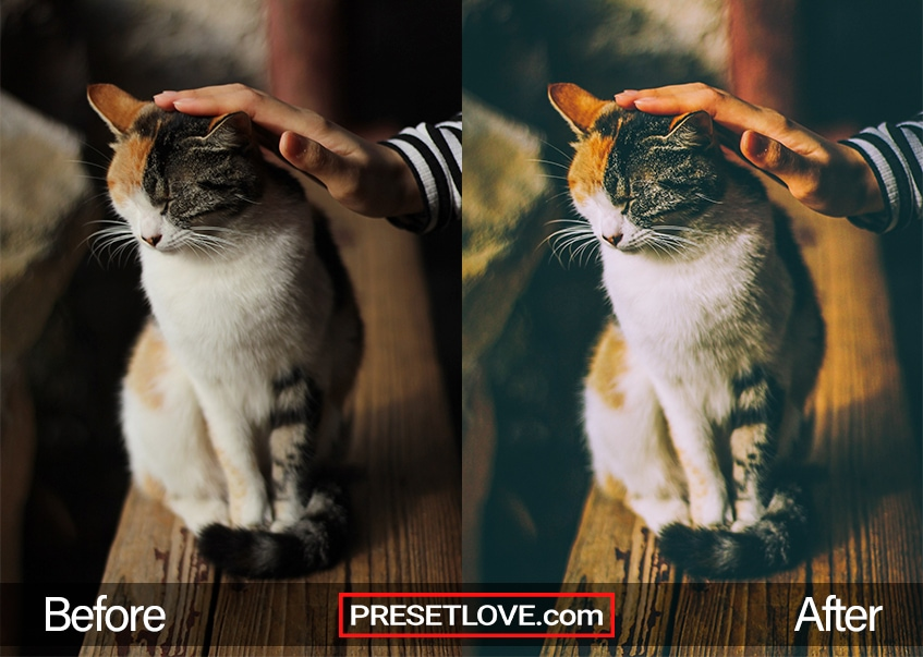A soft film preset of a calico cat being petted