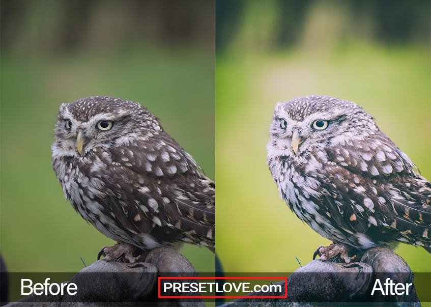 A soft matte photo of an owl, with vibrant greens in the background