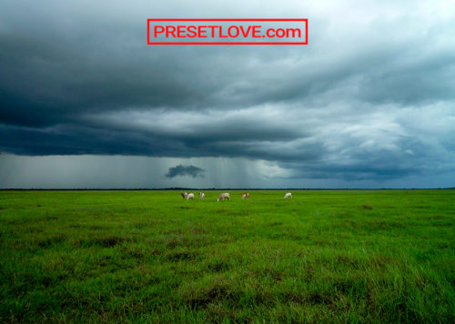 A vibrant photo of a grassland with cattle grazing at the distance
