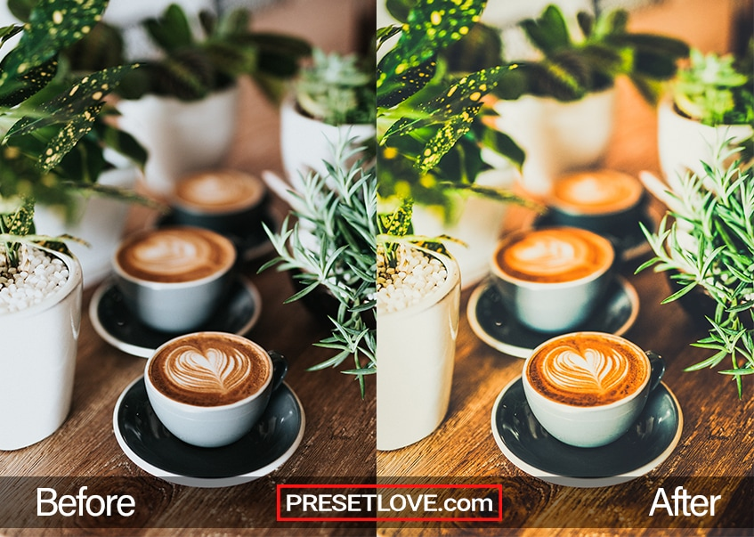A warm cafe photo of three cups of coffee lined up on a wooden table with plants on the side