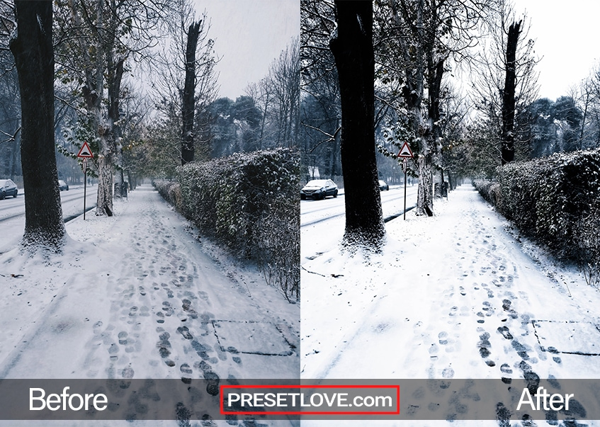A sidewalk lined with trees and covered in snow