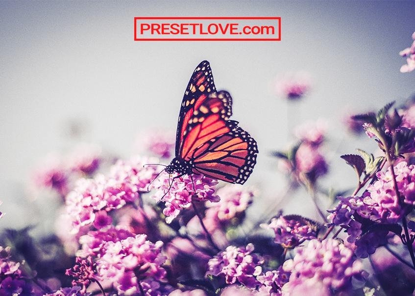 Butterflies Preset Free Lightroom Presets