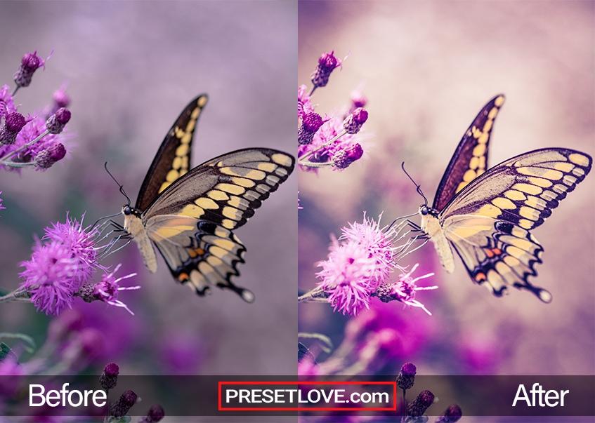 Butterflies preset - swallowtail butterfly