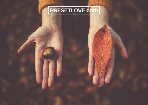 Autumn Vintage Free Lightroom Presets
