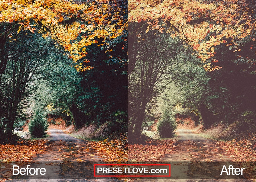 Autumn vintage preset applied on an outdoor fall scene