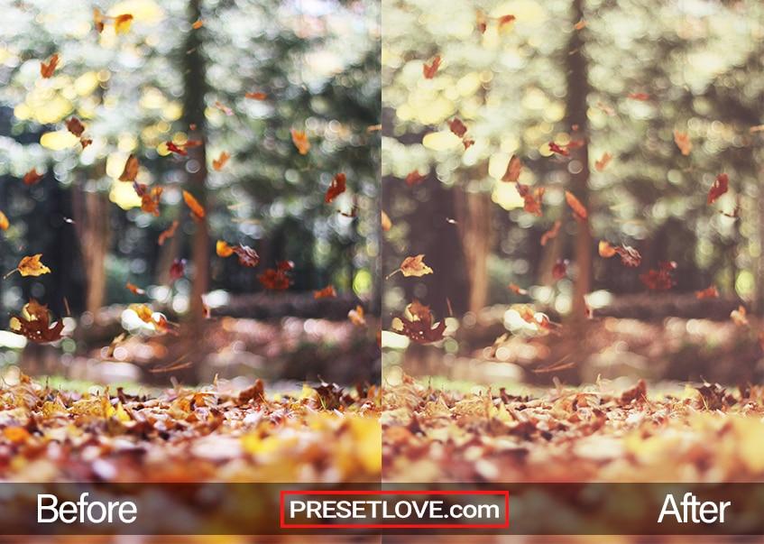 Autumn vintage preset- fall