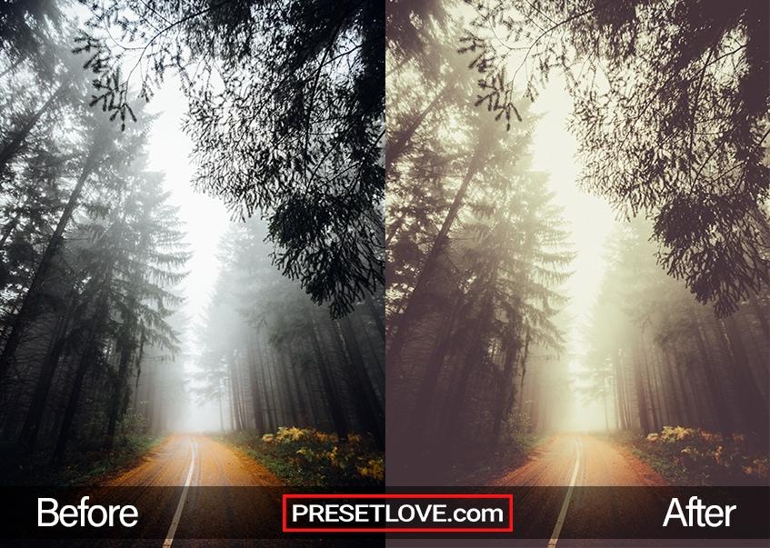 Autumn vintage preset- foggy road
