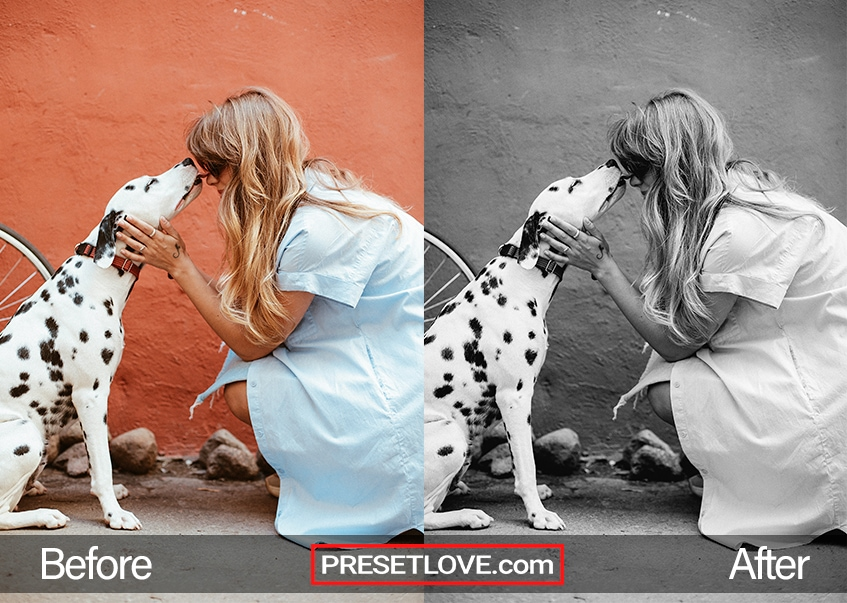 Old BlacknWhite preset - dalmatian