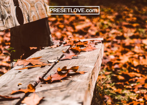 Autumn Preset Free Lightroom Presets