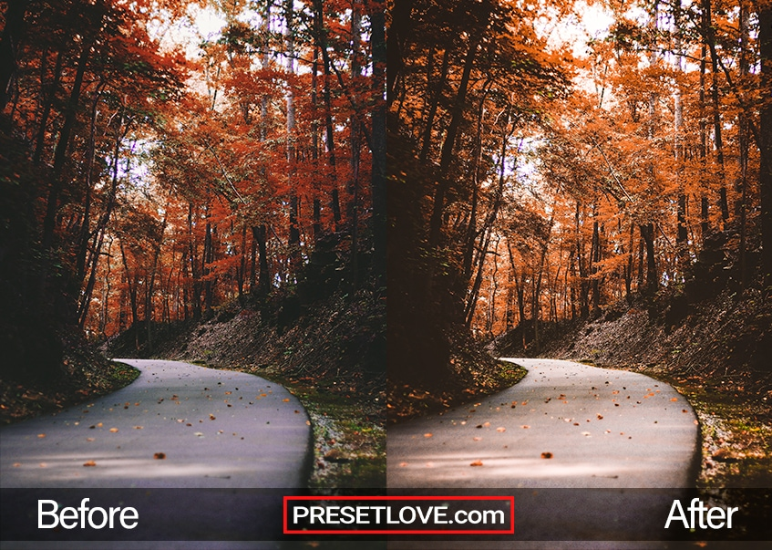Autumn Preset autumn leaves