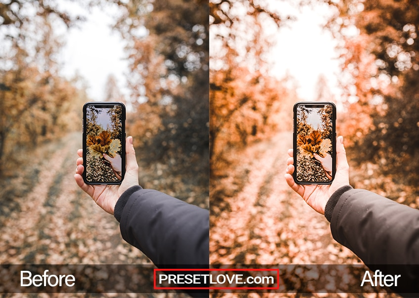 Autumn Preset fall foliage