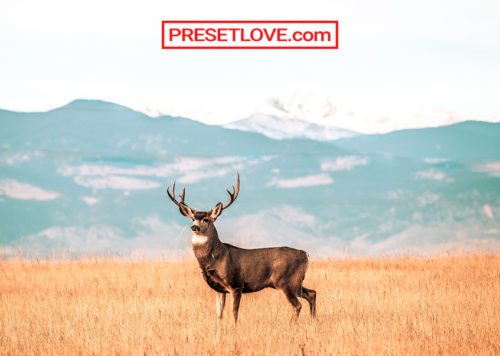 Wildlife Preset Free Lightroom Presets