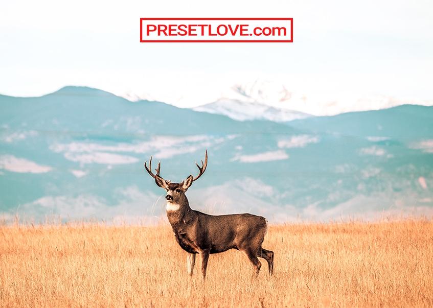 Wildlife Preset Free Lightroom Presets