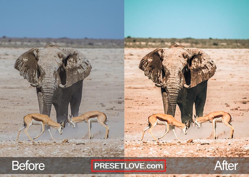 Wildlife Preset elephant