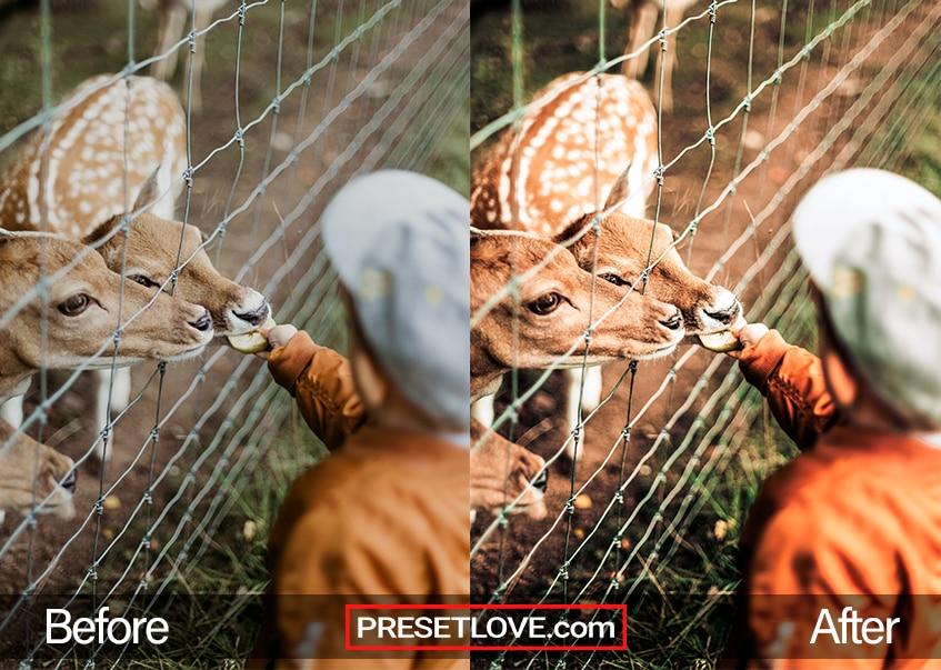 Wildlife Preset deer feeding