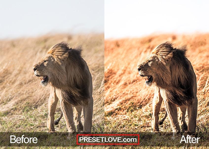 Wildlife Preset king of the jungle