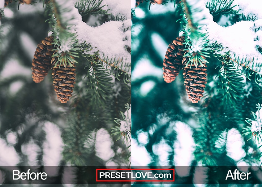 Winter Holidays Preset - snowy pine