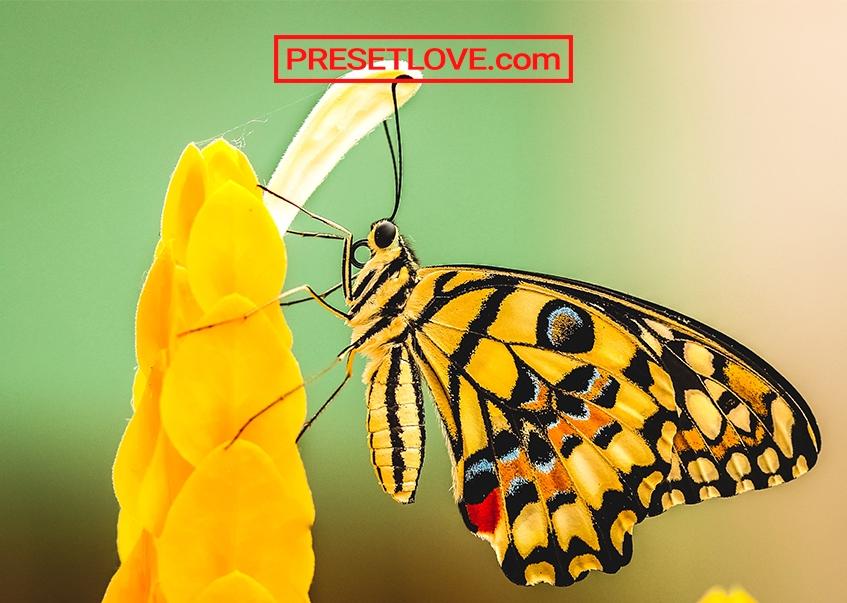 Macro Preset by Presetlove.com