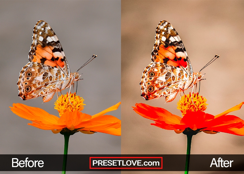 Macro Preset - rose butterfly