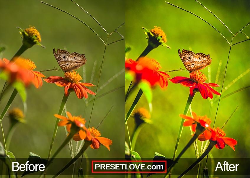 Macro Preset - perfect mantis