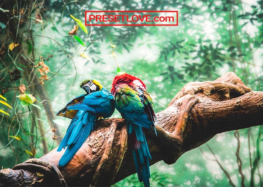 Exotic Trip Preset by Presetlove.com