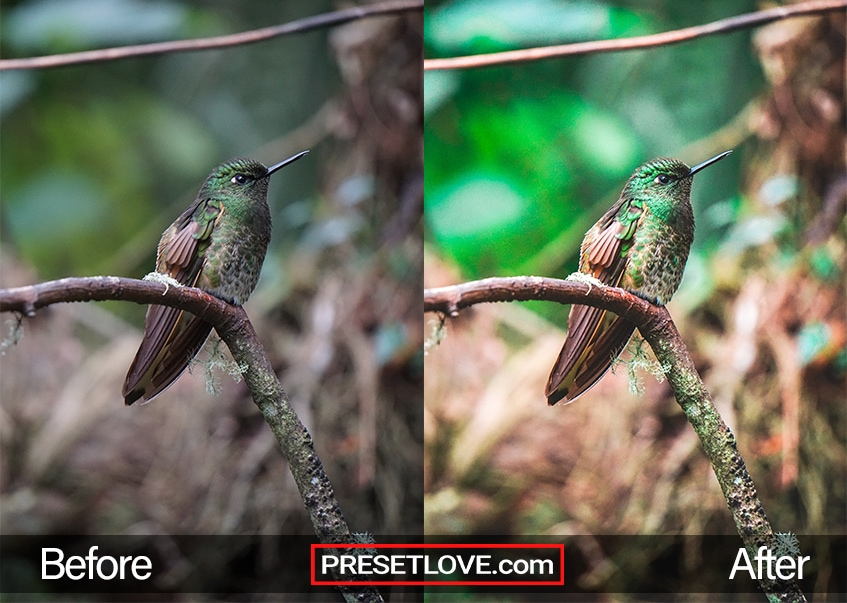 Exotic Trip spring and nature preset applied on a humming bird's photo