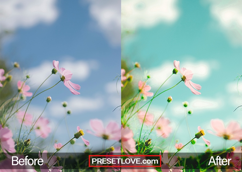 A warm and clear spring preset on a flower photo