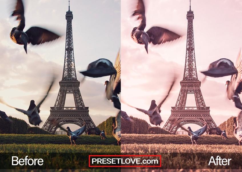 Birds taking flight in front of the Eiffel Tower