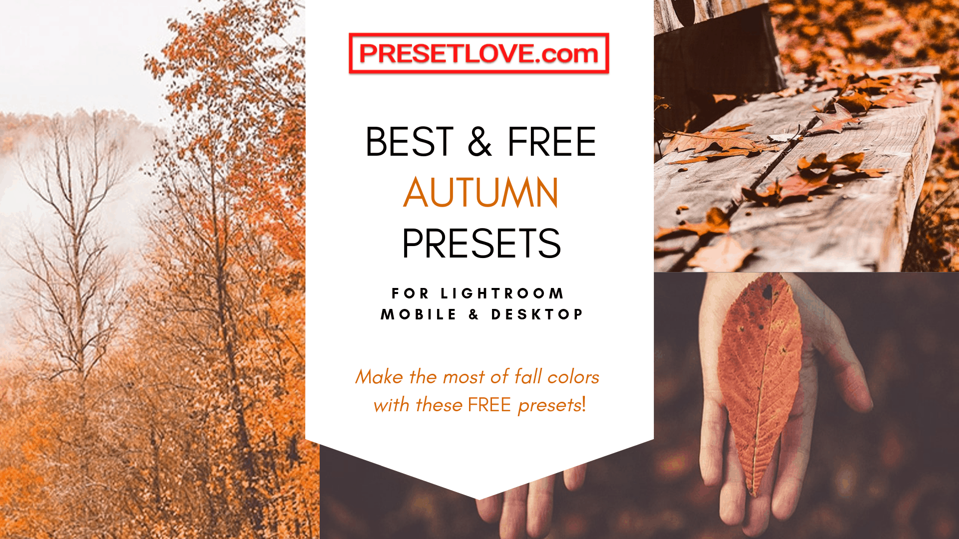 Fall Presets for Lightroom mobile and desktop