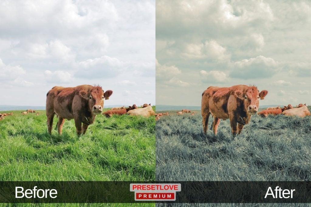 A cattle in a grassy field