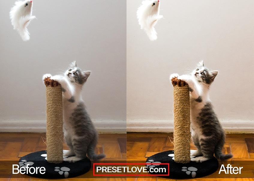 A gray and white kitten leaning on a scratch post