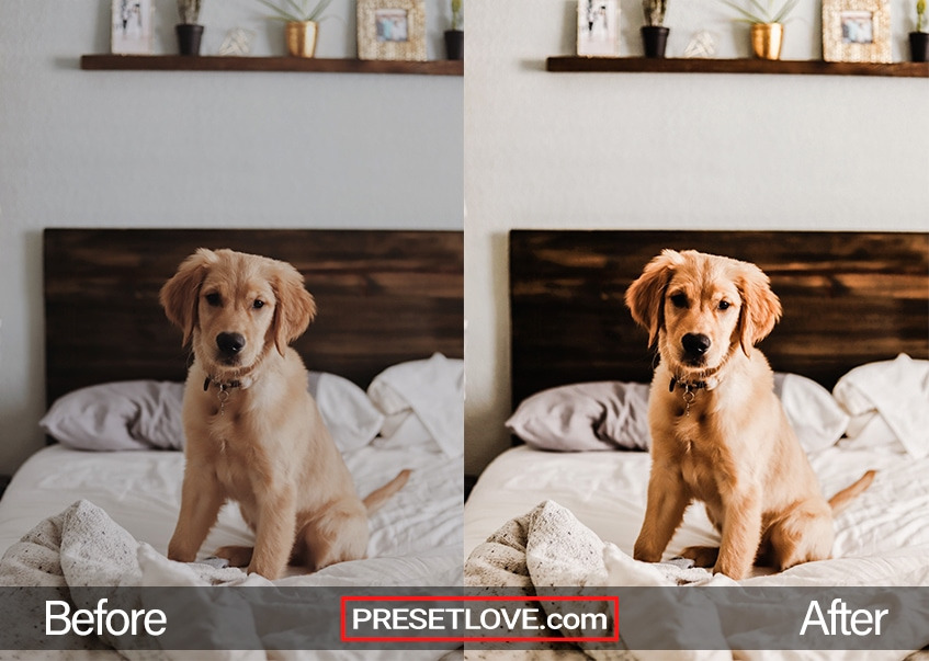 A golden retriever puppy on a soft white bed