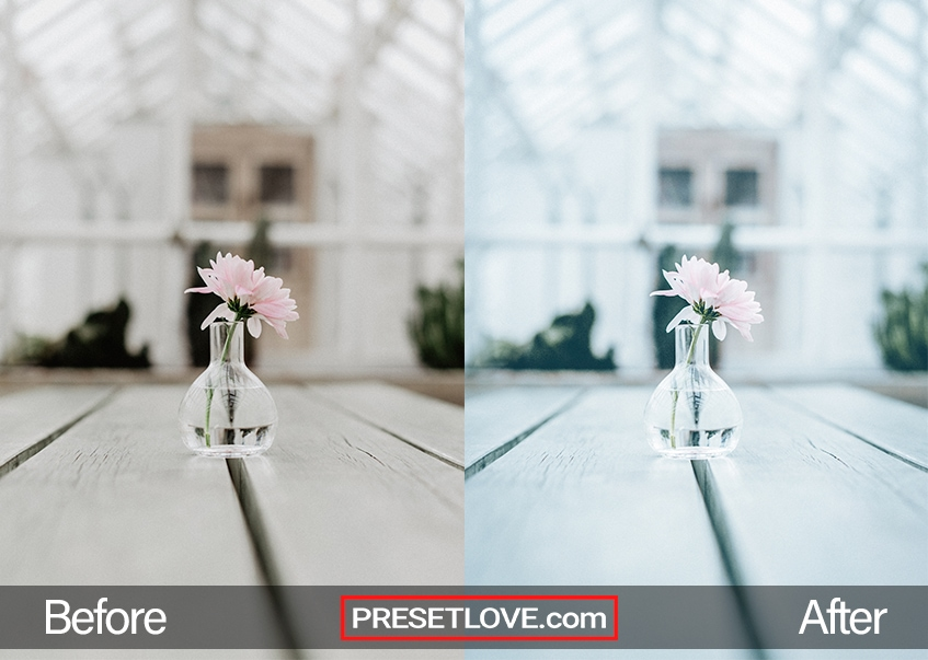 A soft photo of a single flower in a glass vase