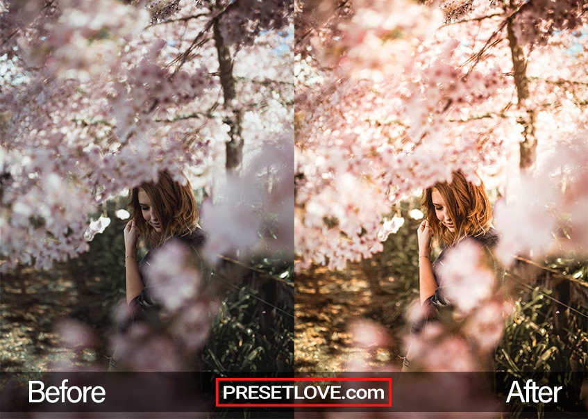 Photo of a woman surrounded by cherry blossoms, with a warm Lightroom preset applied