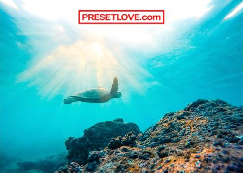 A bright photo of a sea turtle underwater