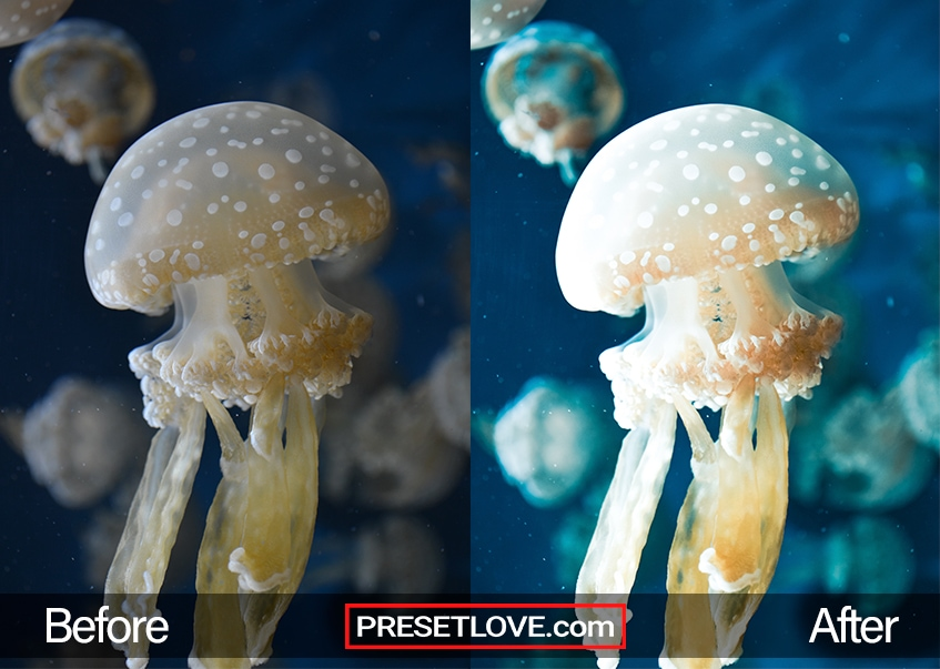 A spotted jellyfish underwater