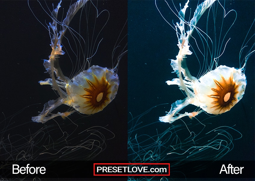 A white and brilliant jellyfish underwater
