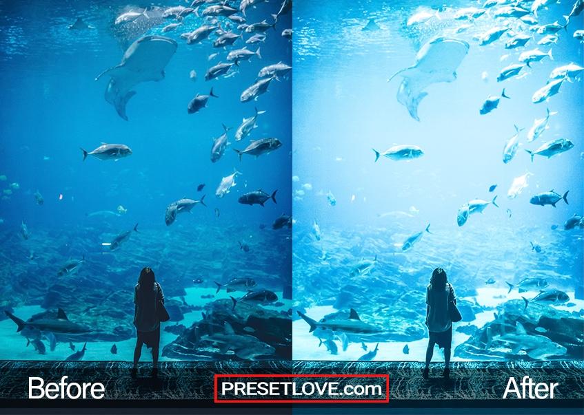 A woman viewing a vast aquarium in an ocean park