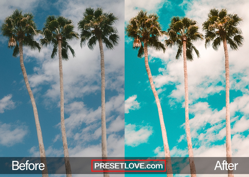 A vibrant summer photo of three palm trees lined side by side