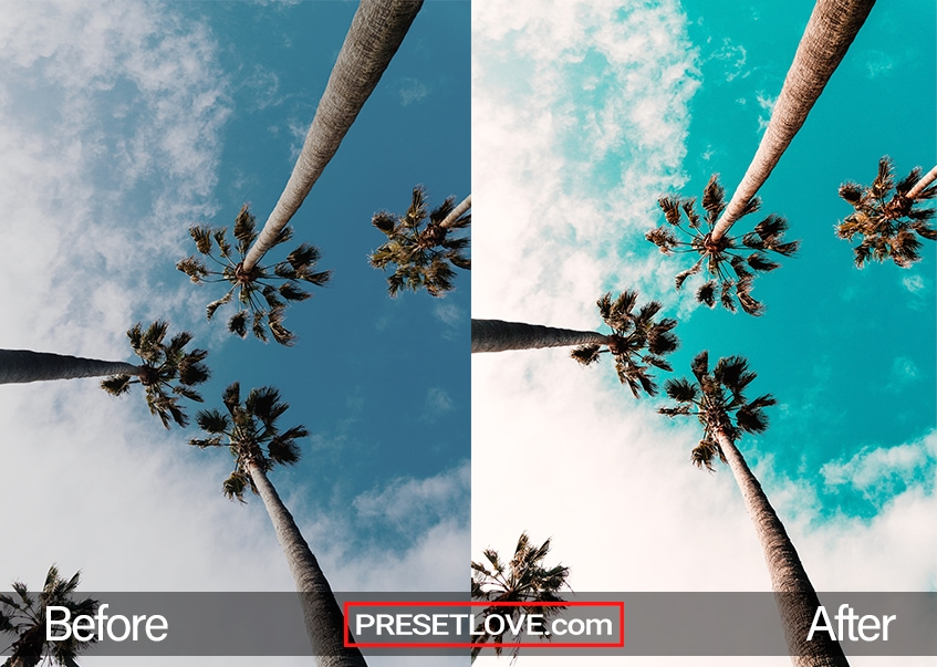 A low-angle vibrant orange and teal photos of three palm trees