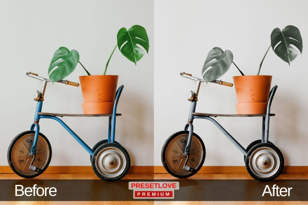 A pot of indoor plants on the seat of a mini bicycle