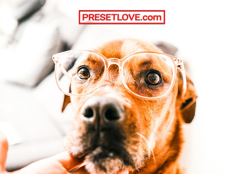 A bright and vibrant photo of a brown dog wearing eyeglasses