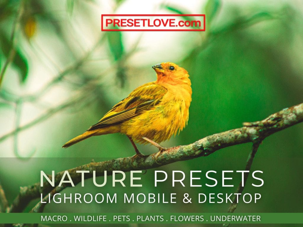 Nature Lightroom Mobile and Desktop Presets by PresetLove